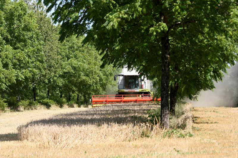 Agroforesterie l 39 agroforesterie s 39 implante en haute marne - Chambre d agriculture charente ...